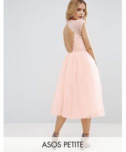 ASOS Petite   Premium Lace Tulle Midi Prom Dress