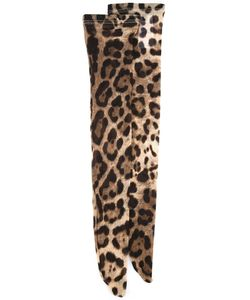 Dolce & Gabbana | Leopard Print Stockings Small Polyamide