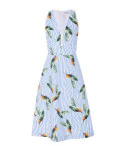 Cacharel | Ed Cotton Dress